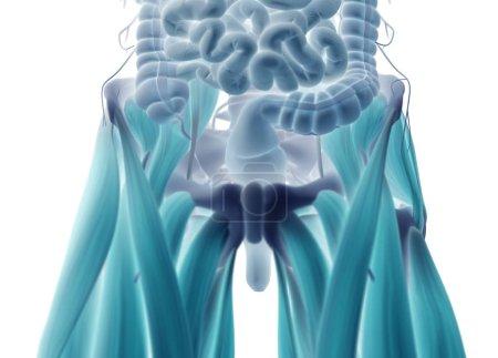 Human digestive system model