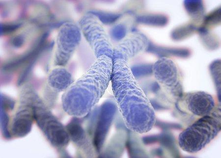 Chromosomes X microscopic models