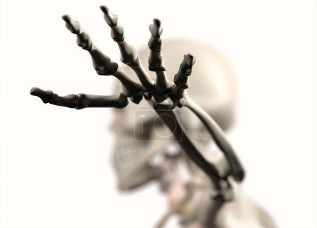 Human hand anatomy model