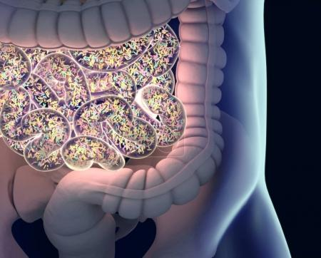 Gut bacterias microbiome