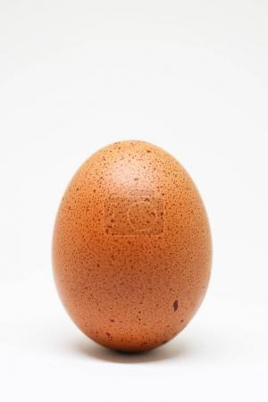Photo pour Oeuf de poulet frais sur fond blanc. oeuf brun isolé . - image libre de droit