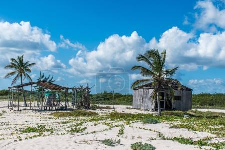 Strandpalme an der playa del carmen mexiko yucatan 3