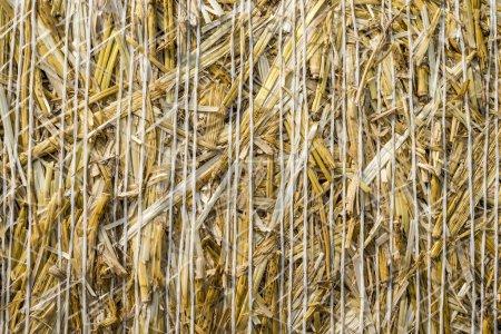 Photo pour Motif gros plan Texture naturelle d'une balle de paille de céréales grain de blé roulé en surface - image libre de droit