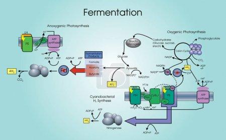 Fermentation is a metabolic process. Vector Art, Illustration design.
