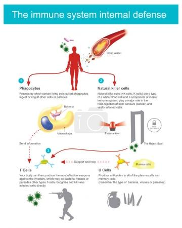 Process by which certain living cells called phago...