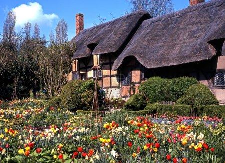 Anne Hathaways Chalet avec des bulbes de printemps en fleurs au premier plan, Shottery, Stratford-upon-Avon .