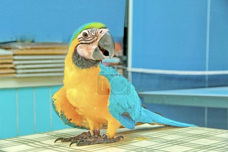 3 Months Blue and Yellow Macaw lovely bright children's emotions