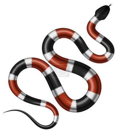 Illustration pour Illustration vectorielle du serpent corail. Serpent tropical isolé sur fond blanc . - image libre de droit