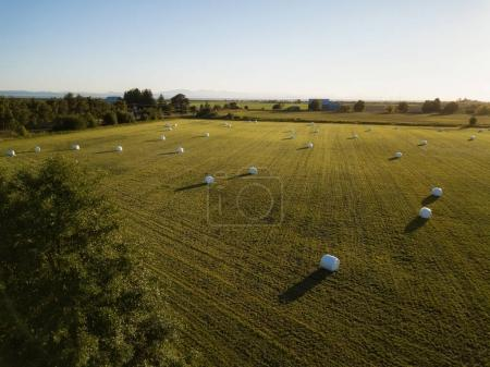 Aerial view of the farm fields with hay bales during a summer sunset. Taken in Tsawwassen, Greater Vancouver, BC, Canada.