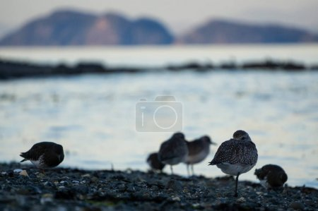 Birds at Port Hardy