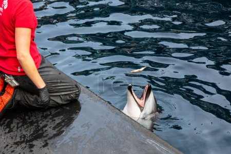 Photo for Vancouver, British Columbia, Canada - April 26, 2019: Dolphin with Trainer in Vancouver Aquarium. - Royalty Free Image
