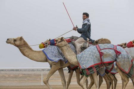 man riding camels in desert