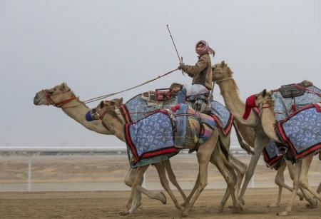 man riding camels in desert