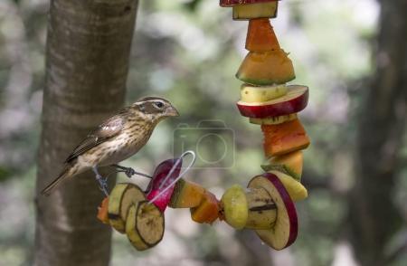 oiseaux sauvages au Mexique