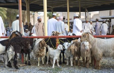 Photo for NIZWA, OMAN - JUNE 23, 2017: people gathering before traditional Habta Market where goats are sold, bought and exchanged the traditional way every Friday in Nizwa - Royalty Free Image
