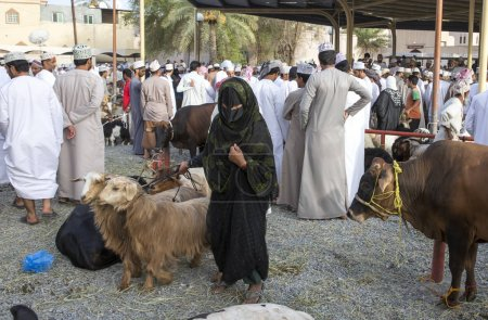 Omani lady with her goats
