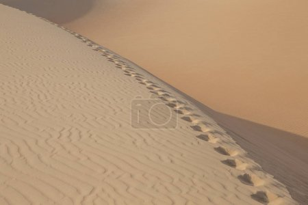 dunes of Liwa desert and footprints