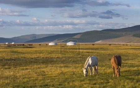 Photo pour Chevaux Mongols dans un paysage du Nord de la Mongolie - image libre de droit