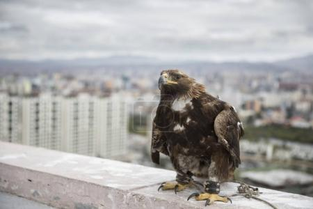 eagle resting at rooftop