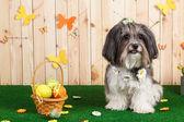 Studio záběr roztomilý pes v zářivé jarní velikonoční scéně