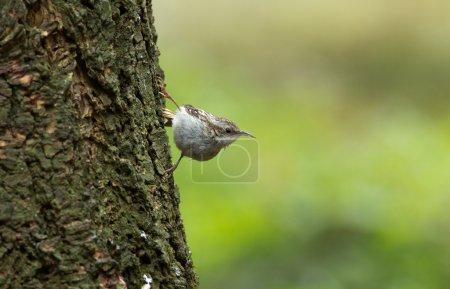 Sparrow bird, Passeridae.