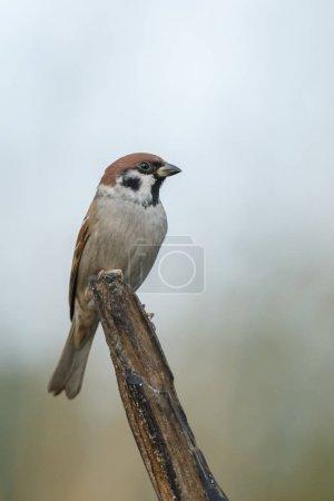 Sparrow bird on nature