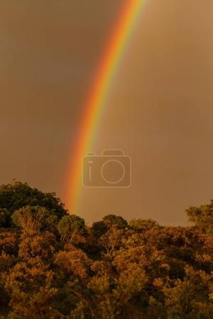 Rainbow in sky over trees