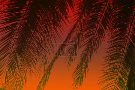Beautiful tropical colored background: palm leaves