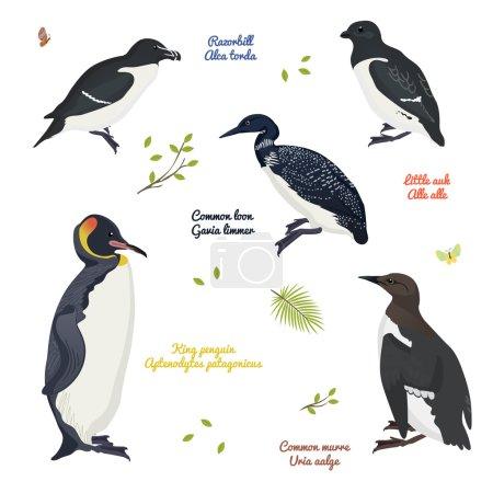 Illustration pour Ensemble d'oiseaux dessin animé vectoriel coloré illustration. Matériel éducatif - image libre de droit