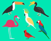 Set of flat birds isolated on background different tropical and domestic birds cartoon style simple birds for logos