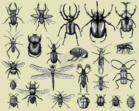 Illustration pour Grand ensemble d'insectes insectes insectes coléoptères et abeilles, puces de nombreuses espèces en vintage vieux style dessiné à la main gravé illustration animaux gravés sur bois - image libre de droit