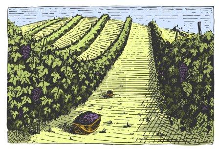 Illustration pour Vintage gravé, paysage de vignobles dessinés à la main, champs de toscane, vieux gratte-papier ou design de bouteille de société de vin de style tatooo - image libre de droit