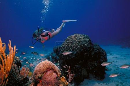 Photo pour Une plongeuse en bikini pose au-dessus du récif corallien dans les eaux chaudes de l'île Sainte-Croix aux îles Vierges américaines . - image libre de droit