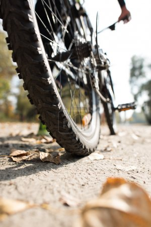 Photo for Rear view of man with bicycle , surface level - Royalty Free Image