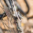 Detail view of rear wheel of bicycle with chain an...