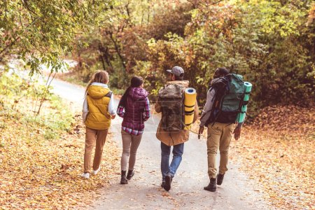 Photo for Back view of young backpackers walking on road in autumn forest - Royalty Free Image