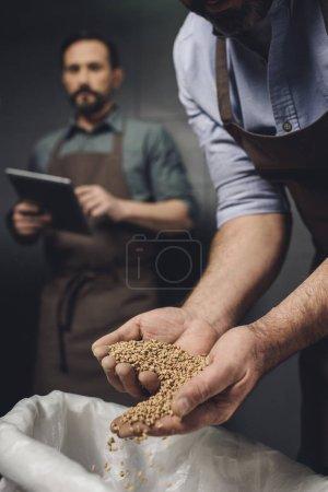 Travailleur de brasserie inspectant les grains