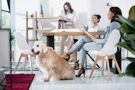 women with dog working at office