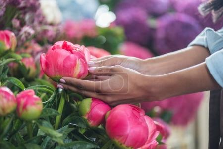Hands with beautiful peonies