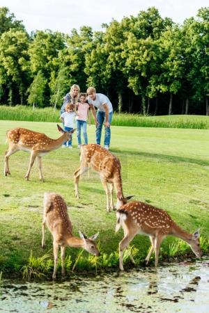 family looking at deer in park