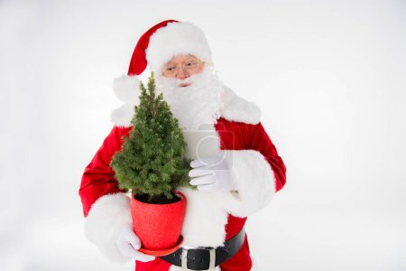 Photo for Happy Santa Claus with little fir tree in pot on white - Royalty Free Image