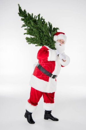 Photo for Happy Santa Claus carrying a fir tree on white - Royalty Free Image