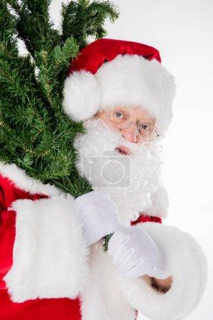 Santa Claus carrying fir tree