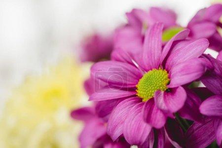 Purple fresh flowers