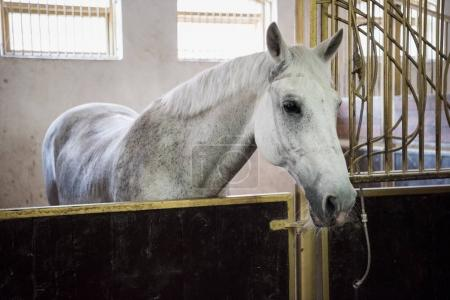 Beautiful purebred horse