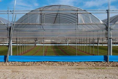 Field of greenhouse