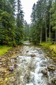 Mountain river, landscape. Forest around hiking trail in Tatra Mountains.