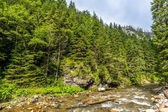 Landscape of mountain river and forest around hiking trail in Tatra Mountains