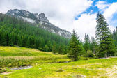 Top of mountain, view from spring meadow and creek, pine forest surrounded peak in Tatra Mountains, landscape