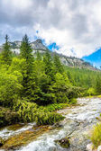 Rapid river in mountains surrounded by pine forest and mountain range